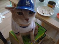 A Dodger fan who also happens to be a Cat.jpg
