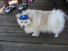A Dodger Dog literally.jpg
